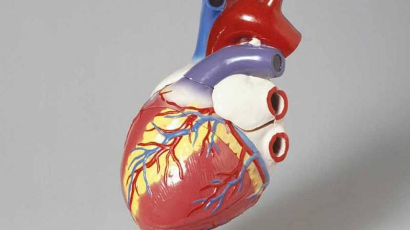 Els nascuts amb baix pes podrien tenir una predisposició a presentar anomalies al cor