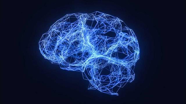 'El neurotransmisor': Los ritmos circadianos