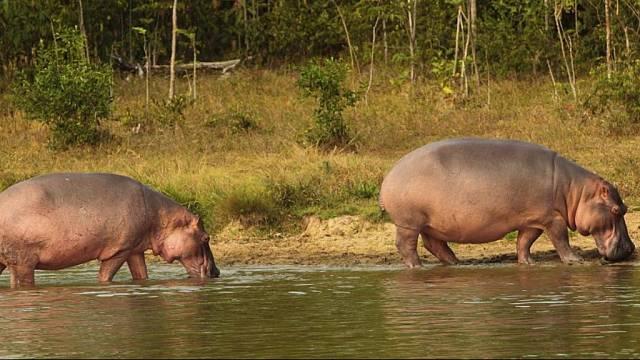 Hipopótamos, girasoles... ¿y qué pasa en Colombia?