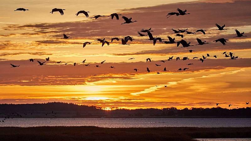 Más cerca - ¿Cómo afecta el cambio climático a la migración de las aves? - Escuchar ahora