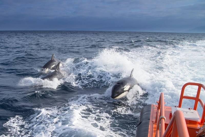 Crónica de Andalucía - Orcas en el Estrecho (Escuchar ahora)