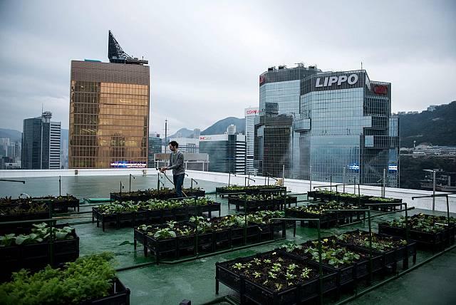 Vida verda - Conreant aliments al pis 48 d'un gratacel