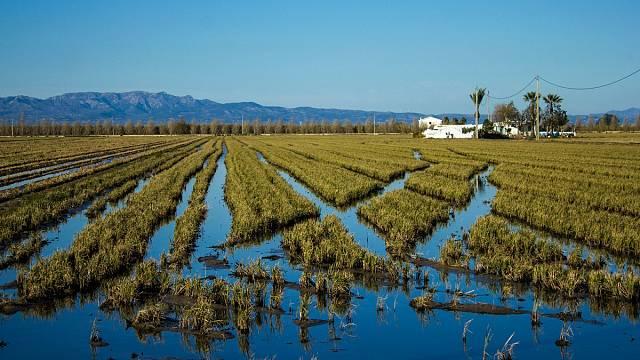 Deltes Fragilitzats i Agricultura en Perill