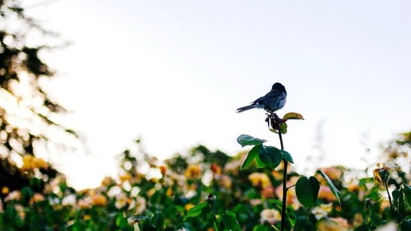 Noches en los jardines - Las golondrinas - 15/09/21 - escuchar ahora