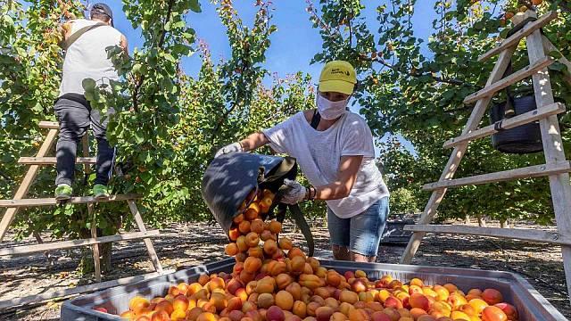Pujada del salari mínim i tercera dosi a Israel