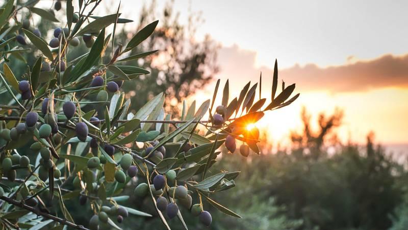 Atriles entre los árboles - Un jardín entre olivos - 19/09/21 - escuchar ahora