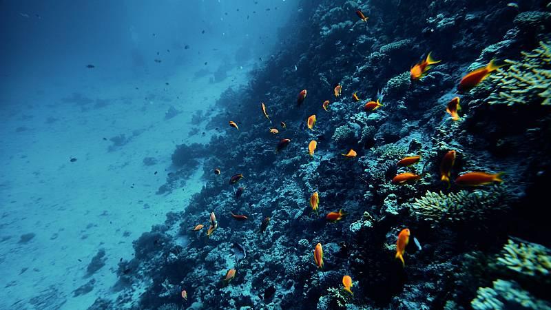"""Más cerca - """"Es posible reconstruir la vida en el mar en 30 años"""" - Escuchar ahora"""