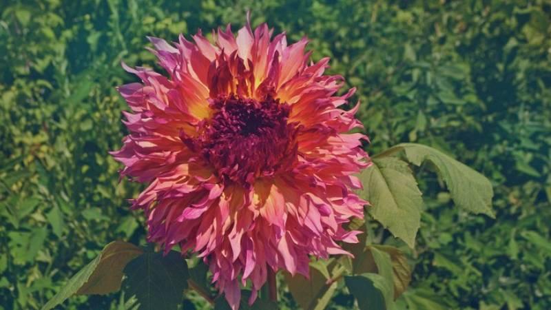 Noches en los jardines - Capricho floral - 20/09/21 - escuchar ahora