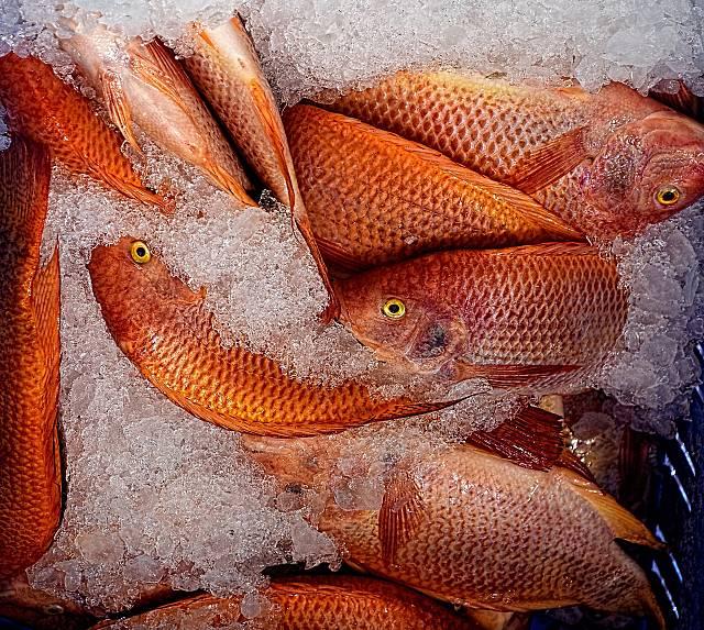 Ruta Opaca dels Aliments. Doblas-Reyes: Canvi Climàtic