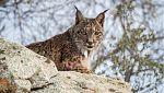 Conservación de la fauna española