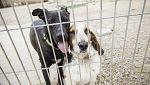 Protectoras ofrecen ayuda para animales de dueños con COVID