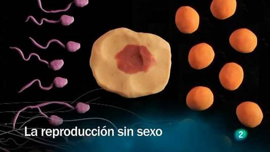 La reproducción sin sexo V.O.