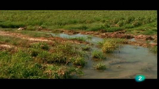 El curso del río