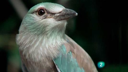 Los pájaros carpinteros 3