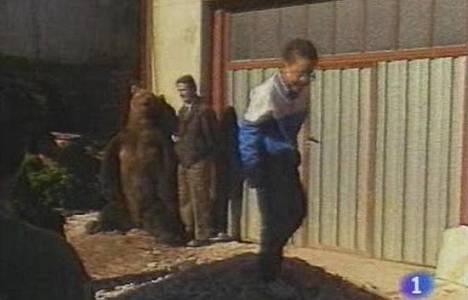Muerte último oso del Cantábrico
