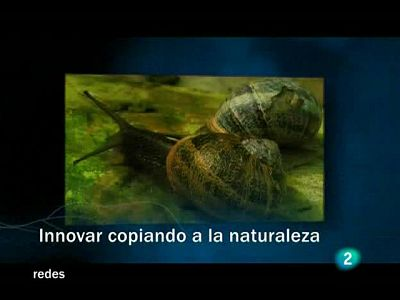 Innovar copiando a la Naturaleza