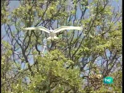 Tuamotu: pájaros y peces