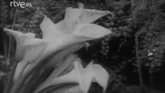 Las plantas piensan