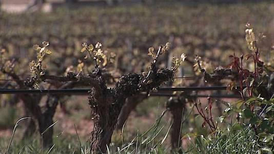 La cuna del vino