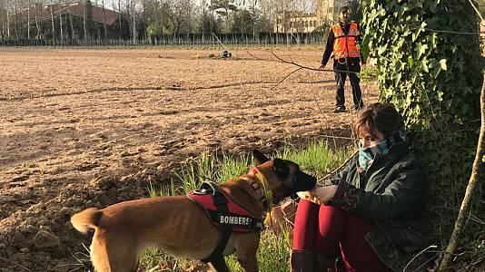 L'ensinistrament de gossos