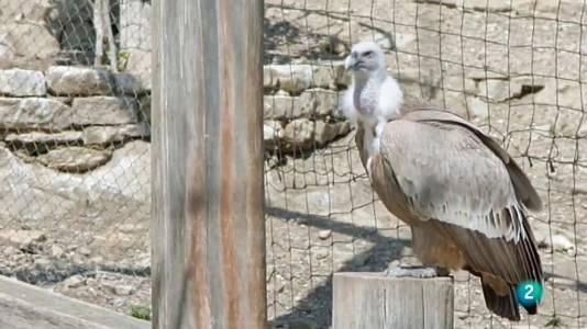 Les aus rapinyaires del Cim de les Àligues