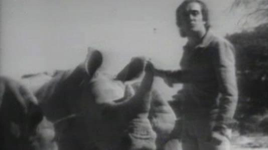 El drama de los rinocerontes