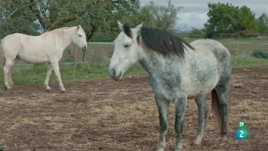 El refugi Cal Lari i la Protectora de Cavalls ADE