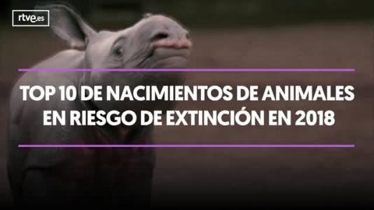 TOP 10 nacimientos de animales en riesgo de extinción