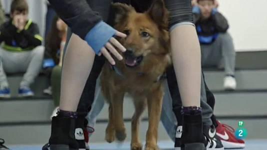 La teràpia amb gossos