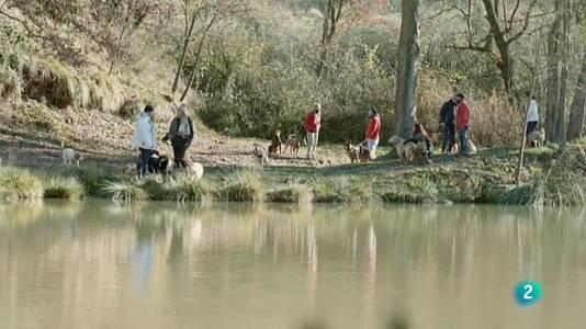 Mantrailing, una activitat esportiva per a gossos