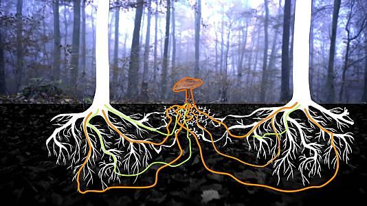 La internet del bosque