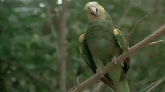 El paraíso de las aves