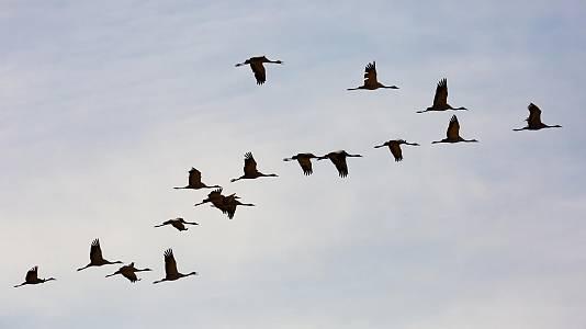 Aves viajeras