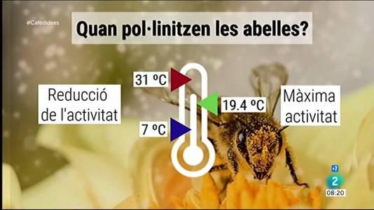 Com afecta la temperatura en les abelles?