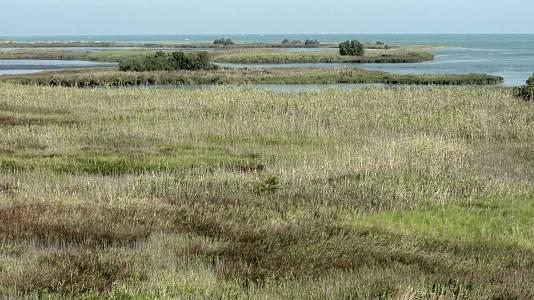 Delta del Ebro (Tarragona)