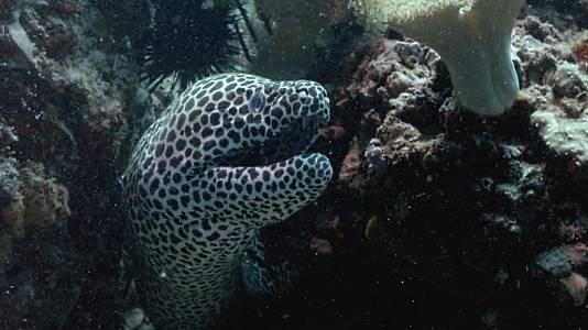 Los defensores del arrecife
