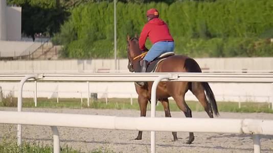 Circuito nal. de carreras de caballos, hipód. de La Zarzuela