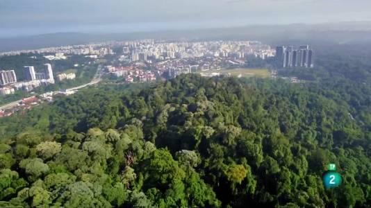 Ciutat salvatge: La vida en la jungla