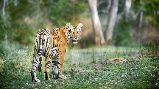 El salvaje Karnataka