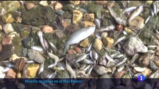 Los peces muertos aparecen de nuevo en el Mar Menor