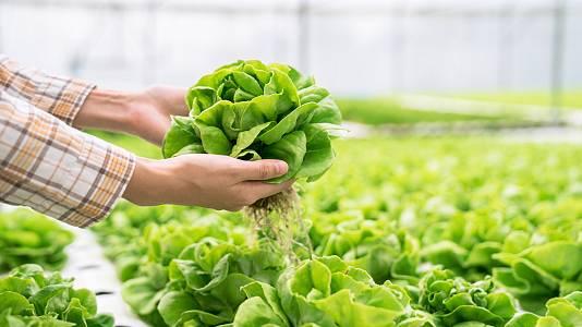 ¿Es posible un cultivo sin suelo?