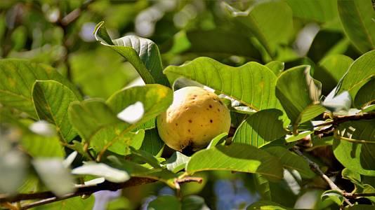 Las hojas de los árboles tropicales tienen propiedades