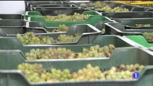 Un nuevo vino universitario sale a la venta