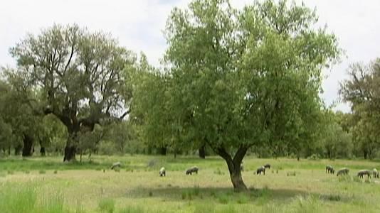 Las dehesas, bosques abiertos