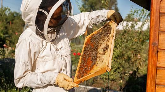 ¿Cómo es la miel de la Alcarria madrileña?
