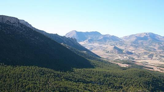 La Sierra de María los Vélez: el bosque de Umbría