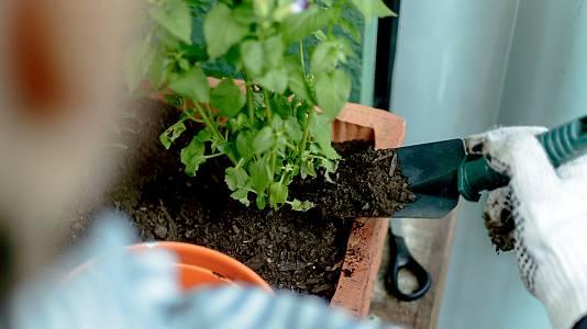 ¿Podemos crear un huerto en nuestra ventana?
