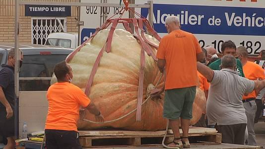 Calabazas Gigantes en Valtierra