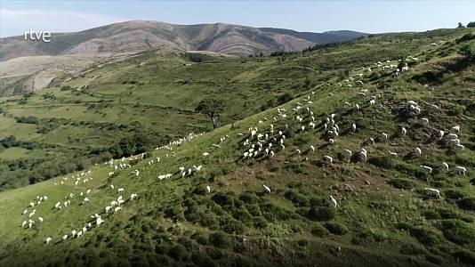Pastos naturales herbáceos