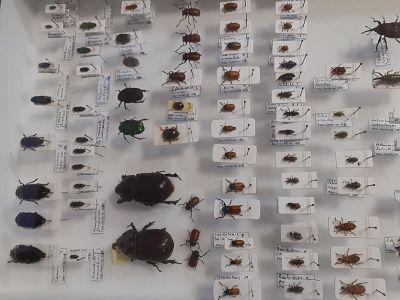 Uso de insectos en la agricultura
